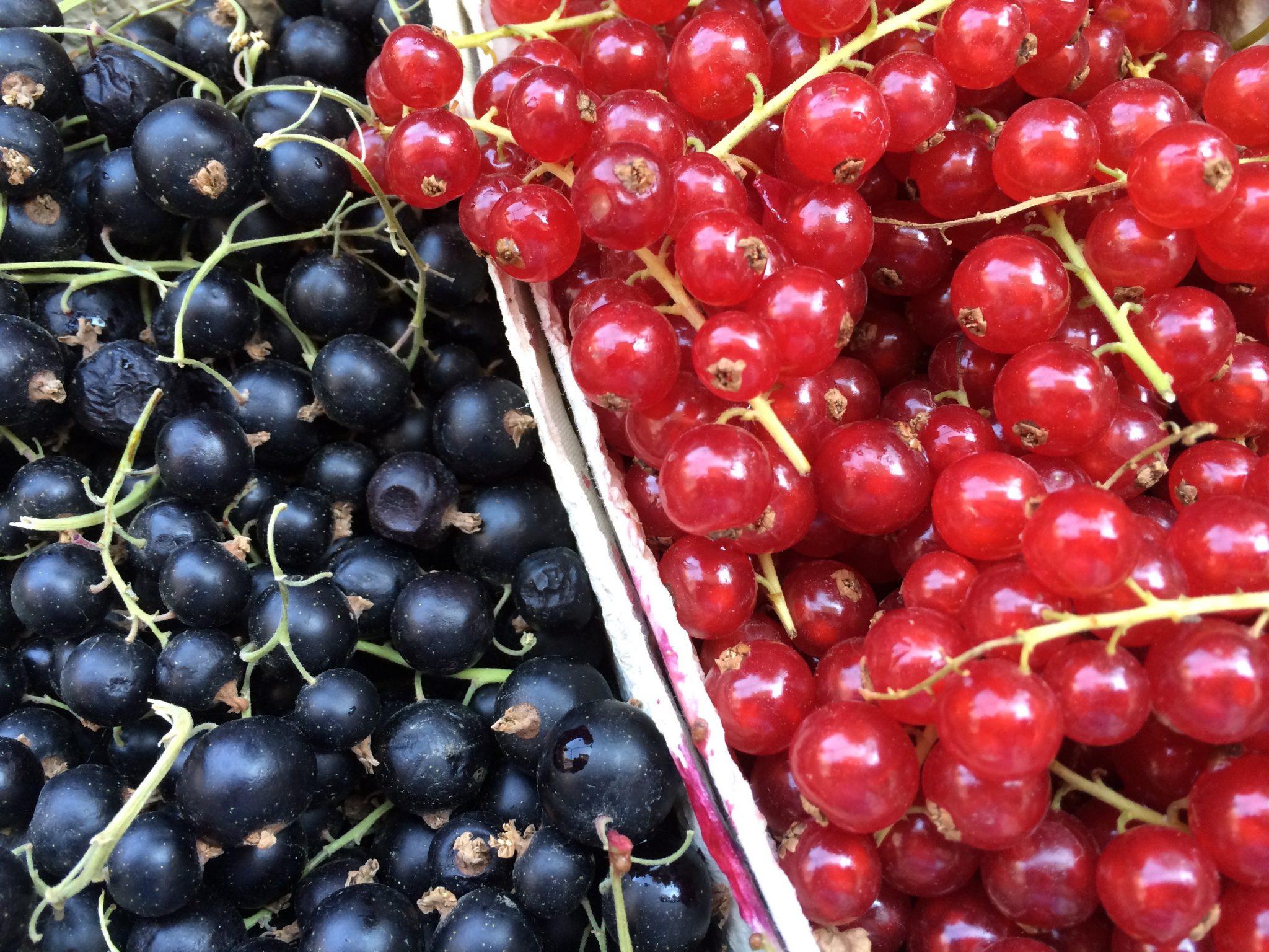 berry deutsch